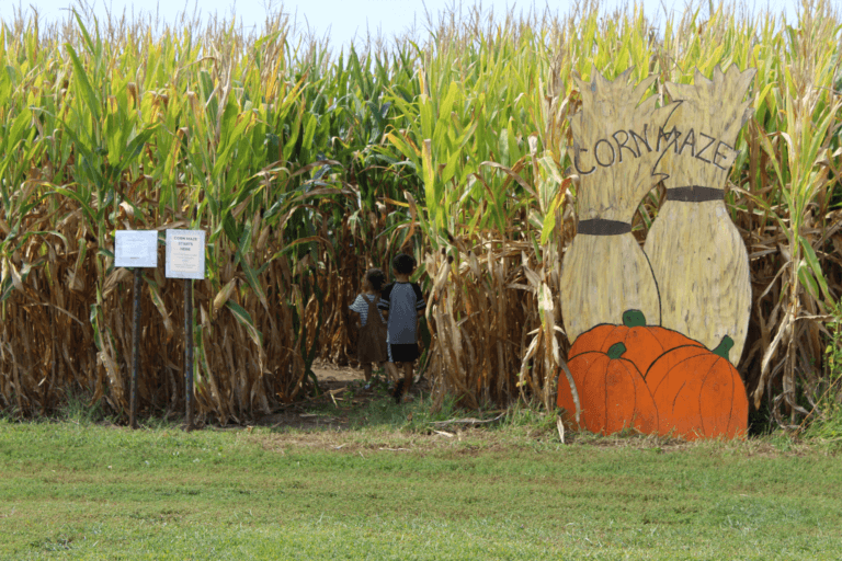 Sand Flats Orchard Entering Corn Maze
